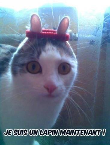 Avez-vous déjà vu un chat-lapin?