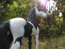 Photo de Gaia-Et-Les-chevaux