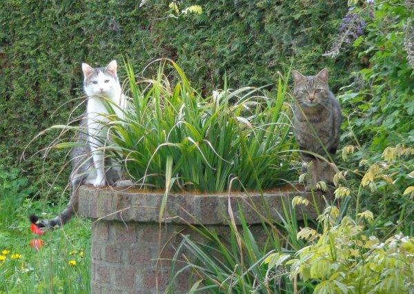 Les chats.....