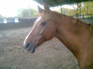Les chevaux...
