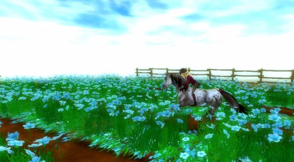 Le roi des petites fleurs bleues :3
