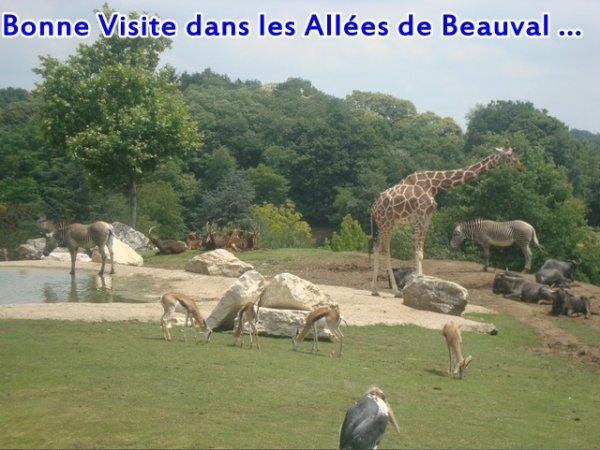 Tarif Zoo / Liens
