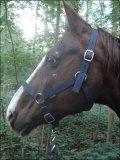 Photo de equusdei