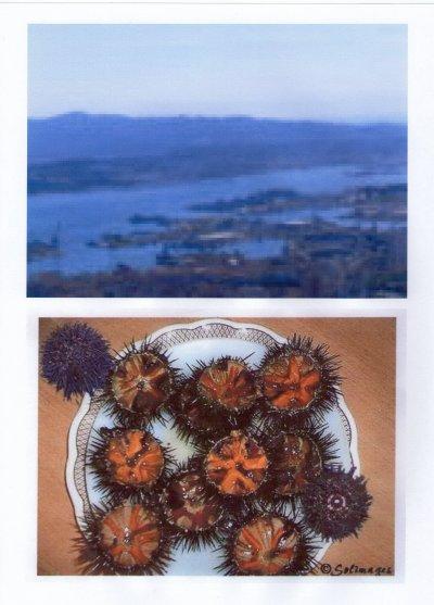 la rade de Toulon la Seyne et de beaux ousins pris sur le site de Solange.