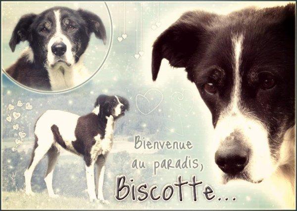 Biscotte