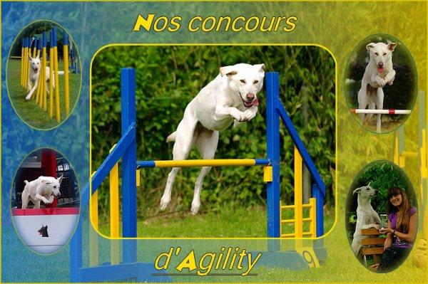 Nos concours d'agility