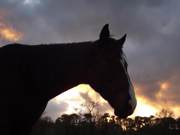 - 46 L'équitation est un art, or l'art n'existe pas sans amour. L'art c'est la sublimation de la technique par l'amour. Nuno Oliveira