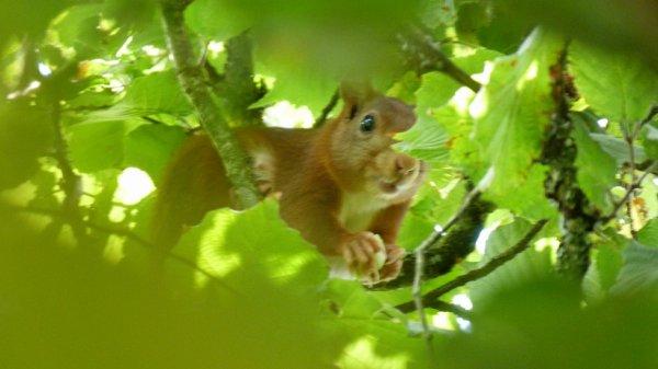 Mon petit écureuil