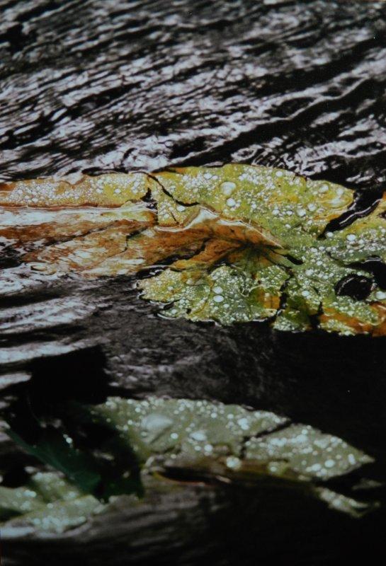 PHOTOS PERSO: Gougouttes sur feufeuilles, et feufeuilles dans le flow