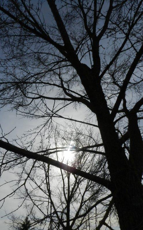 PHOTOS PERSO + ''Au pâle hiver du soleil''.