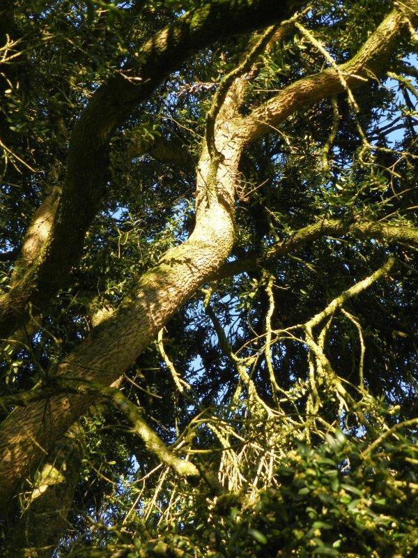 PHOTOS PERSO - Les grigris de l'arbre bicentenaire