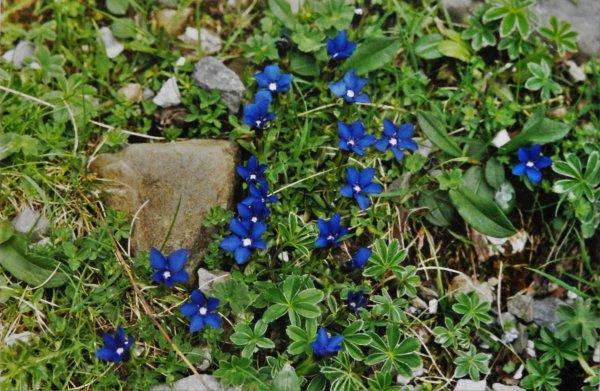 PHOTOS PERSO - a fleur de balade (Pyrénées)