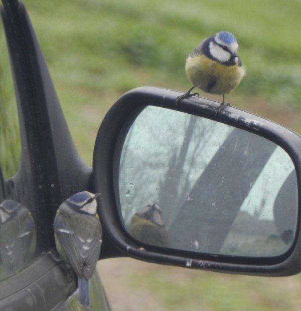 PHOTOS PERSO : Mirror, mirror on the wall...