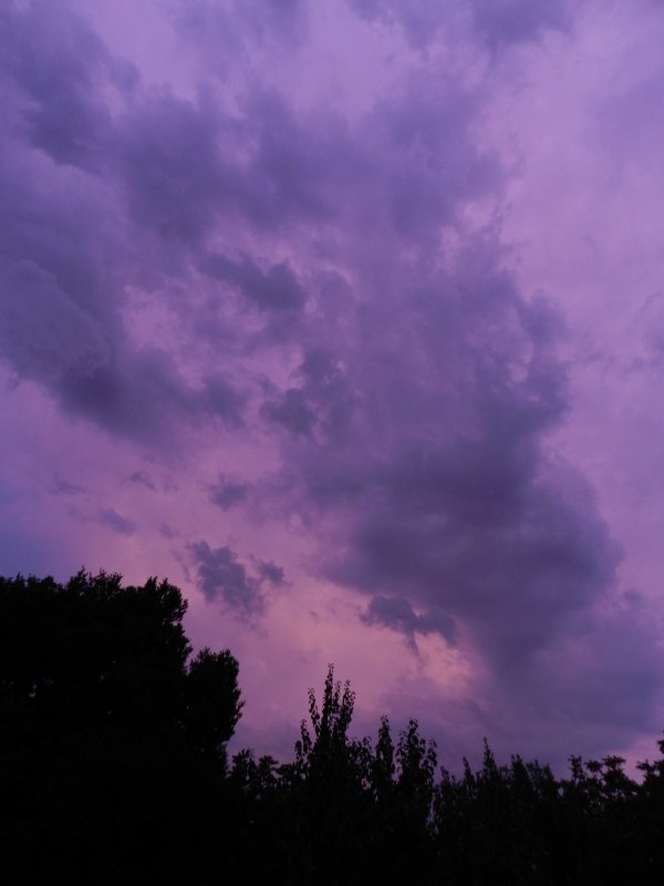 PHOTOS PERSO- Purple Storm