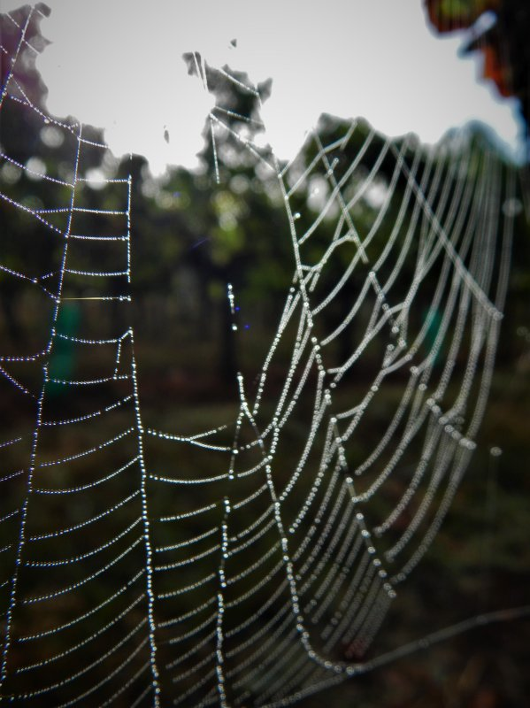 PHOTOS PERSO : SPIDER DEW