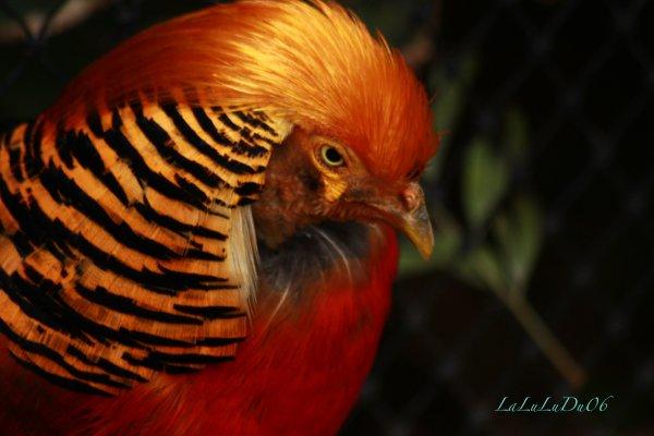 Loro Parque - Oiseaux