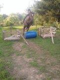 Photo de Horse-MiiL3y