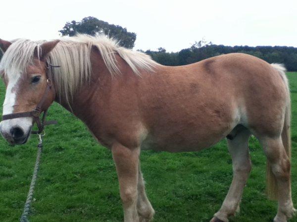voici mon poney de colo