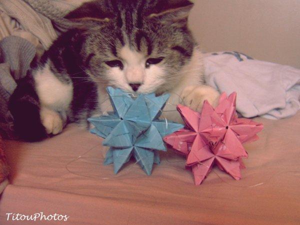 Figaro & ses étoiles . ♥