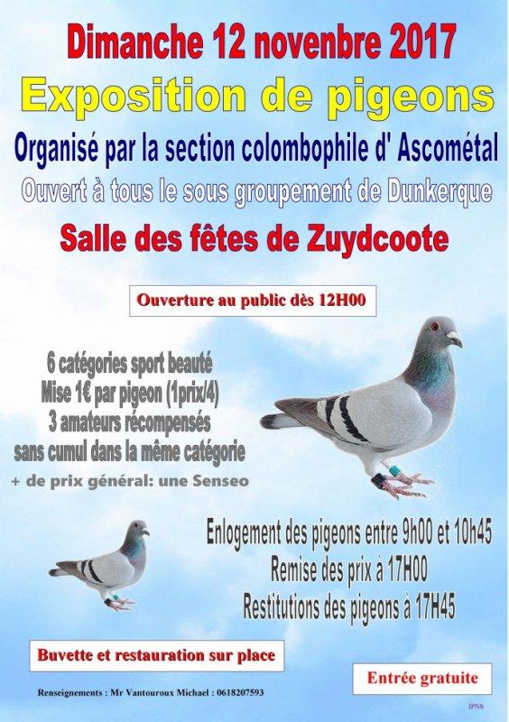 Exposition de pigeons voyageurs à Zuydcoote