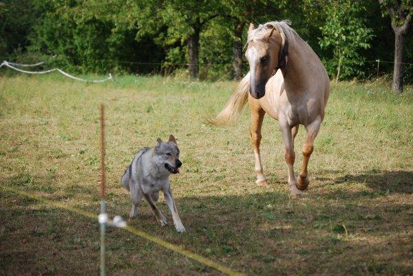 En ballade cet aprem ..... Franck parle à l'oreille des chevaux !