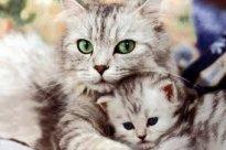 Pourquoi une chatte et sa fille se dispute ?