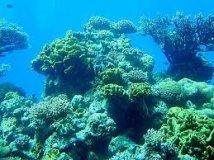 Des coraux dans les eaux froides