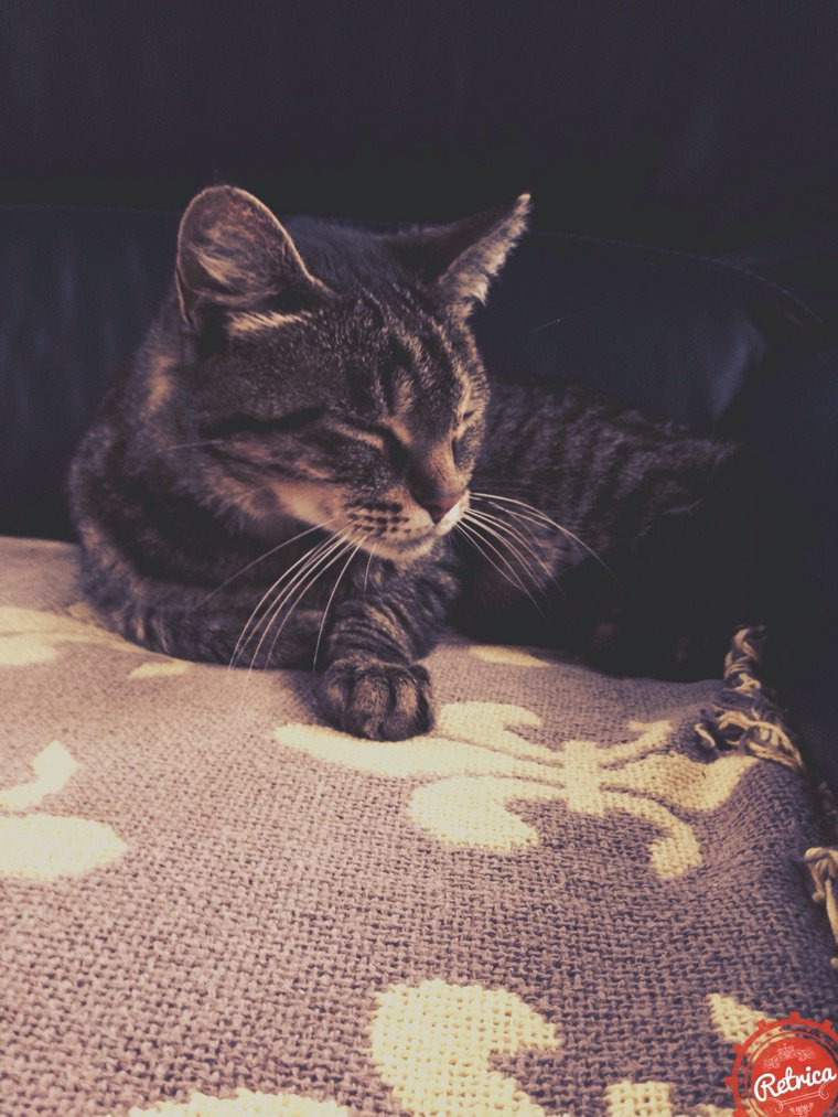 Petit chat ~