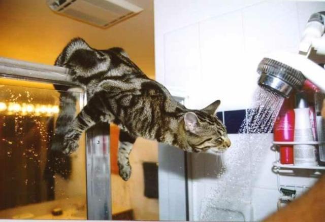 Kizhier = chat......................au pluriel!!