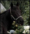 Photo de x-horses-in-my-love-x