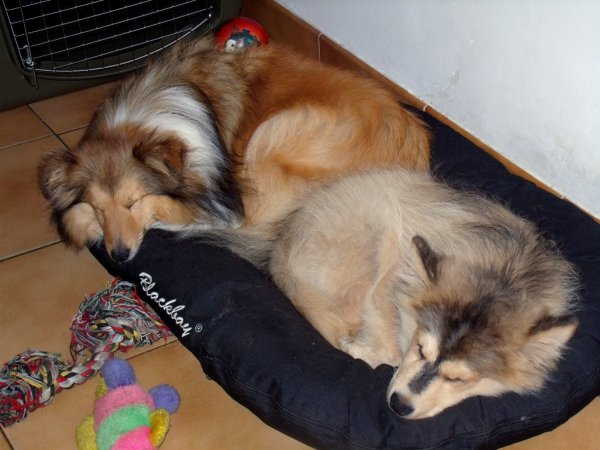 Dur dur la vie de chien !!!