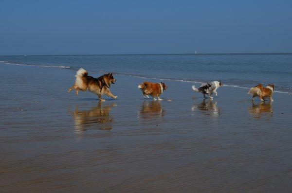 Matinée à la plage avec les copains