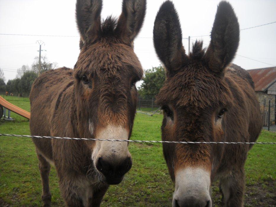 Blog de I-Love-Horses-12
