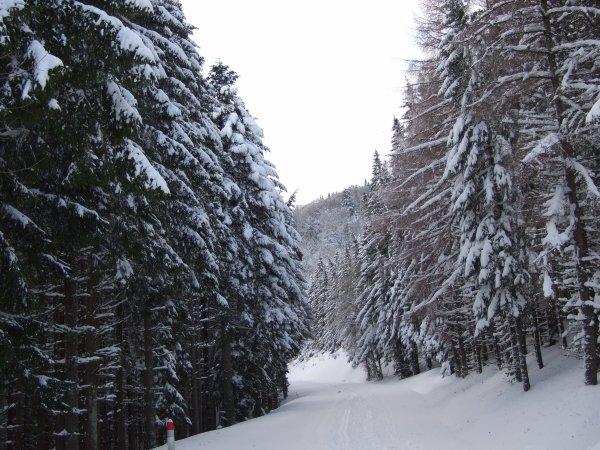 Raquette - Route des crêtes ( Col du Bonhomme).