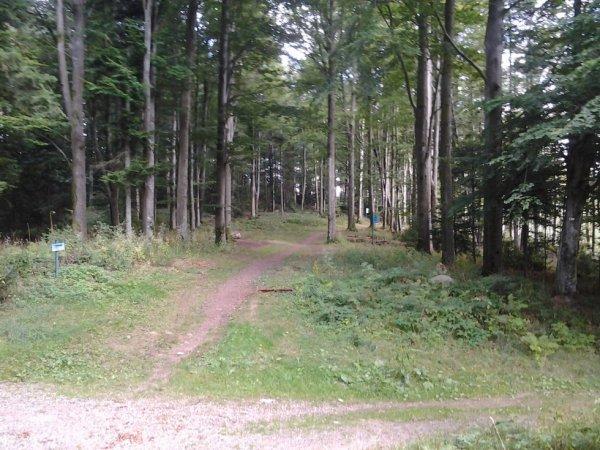 Trail - Entrainement