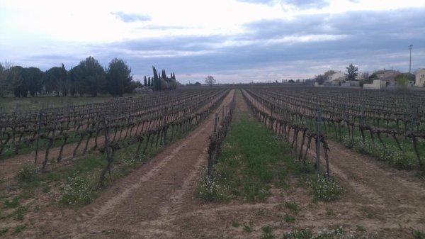 Randonnée - Entre canal du midi et vignobles