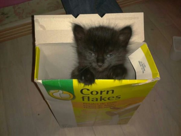 corn cats ......