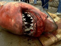 S.O.S requin en danger !!!