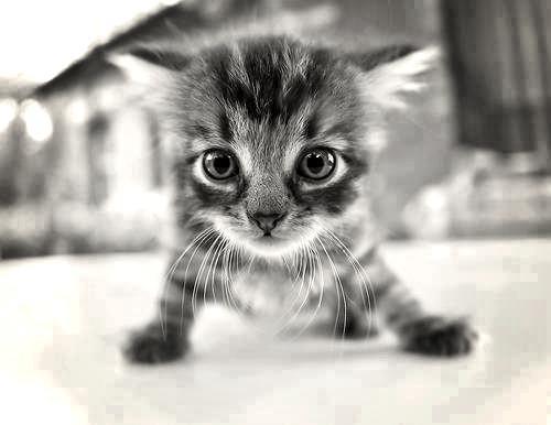 Kiff(likes) si tu le trouve mignon :3♥