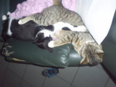 c est mes deux chats