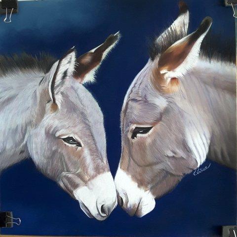 Duo d'ânes