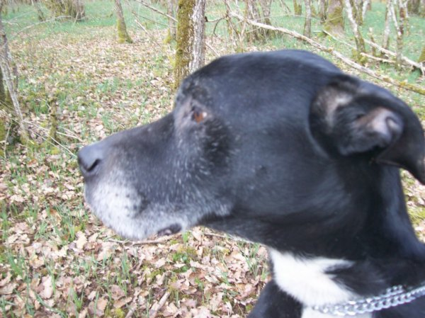 notre chien kimbo