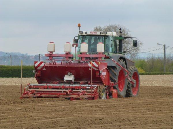 Plantations de patates