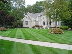 Lawn Treatment Services