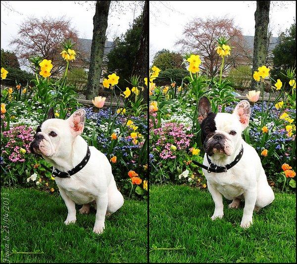 Petit shooting floral..