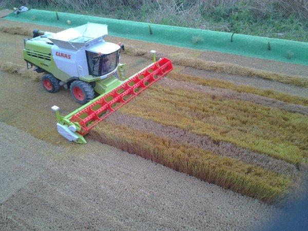 moisson de blé..avec Lexion et coupe de 10 m.