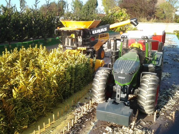 Maïs bruder....pas OGM.....