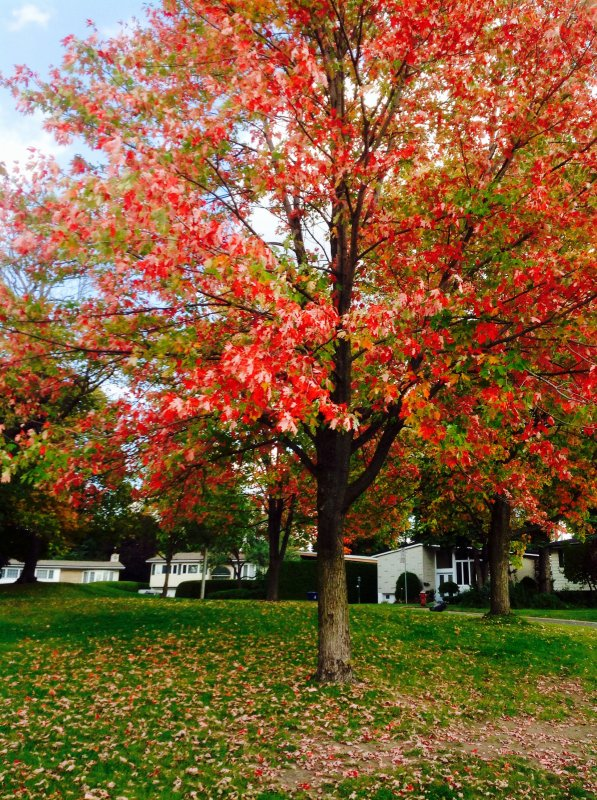 Délicat Autumne...