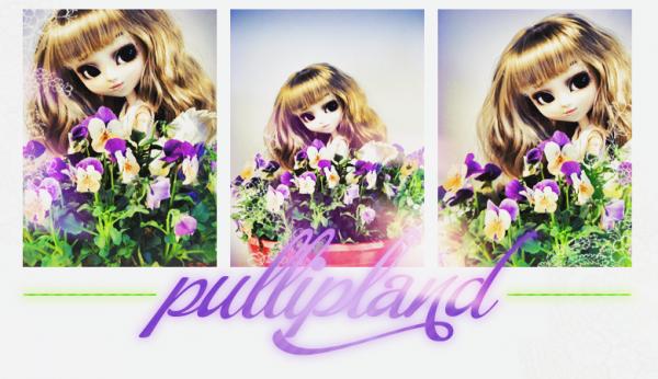 Le forum PullipLand !