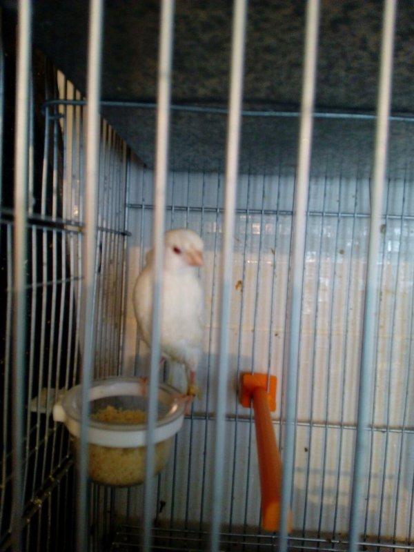 AOA219 .... Albino